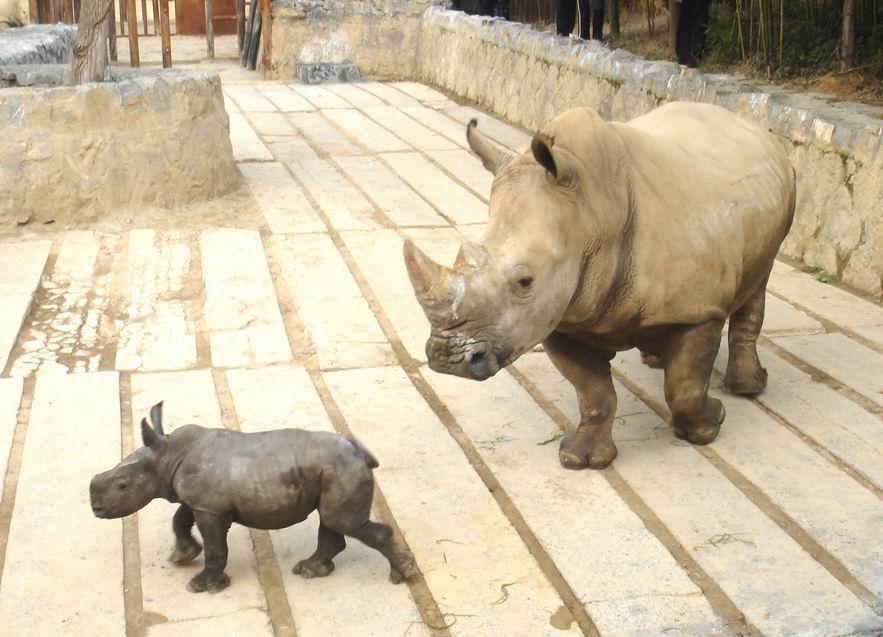 一直很喜欢动物,周末与男友一起去杭州野生动物世界。以前去动物园的时候都只能隔着笼子看看动物,但这次可不一样,完完全全的零距离接触,真是太过瘾了!拍了好多有趣的动物照片,给大家分享一下!动物们真的太太太可爱啦!萌死了萌死了  小老虎的眼神真是太无害太无辜了,差点就要忘记它们以后可是百兽之王了。